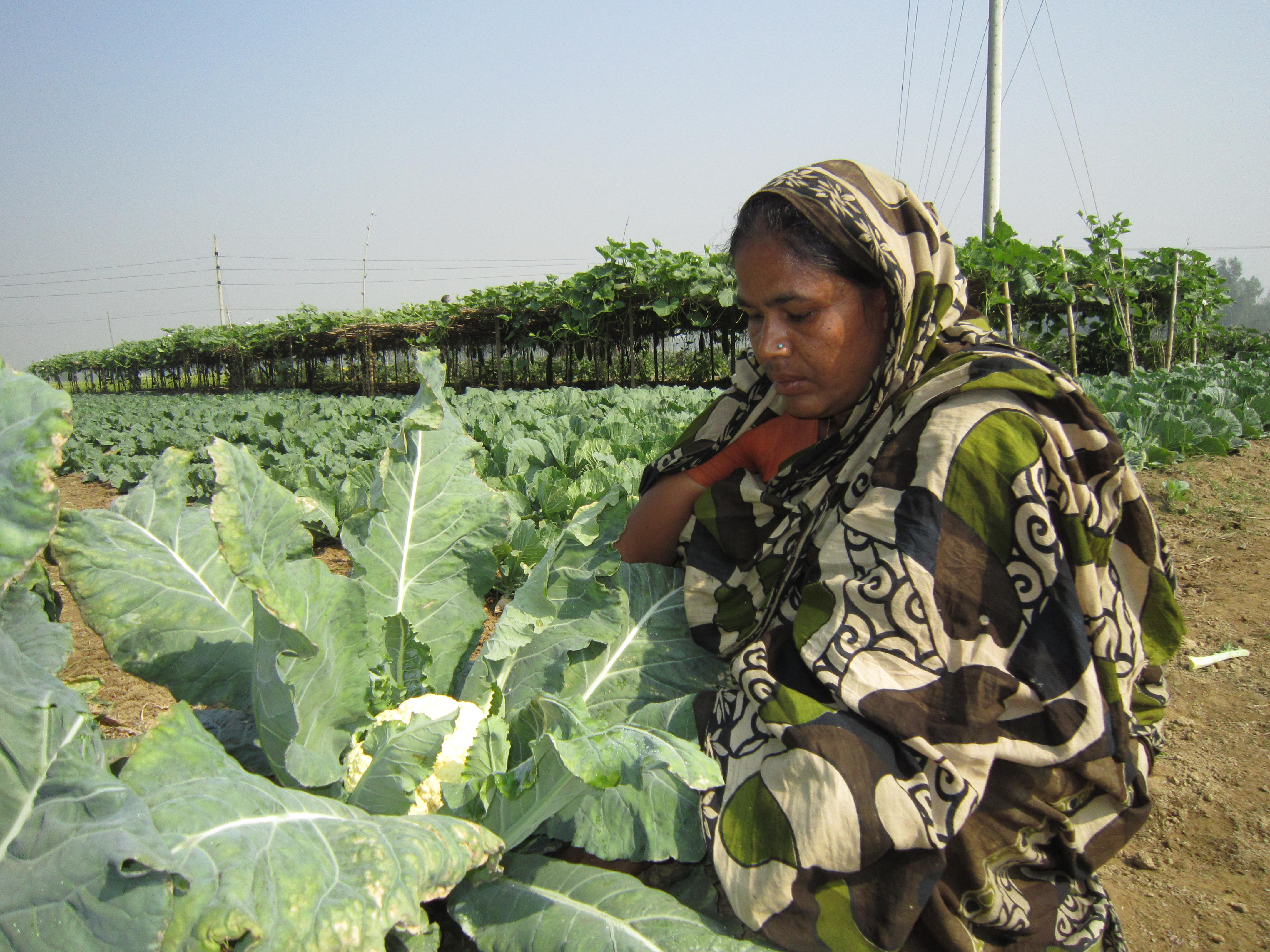 Agriculture Sector Microfinance